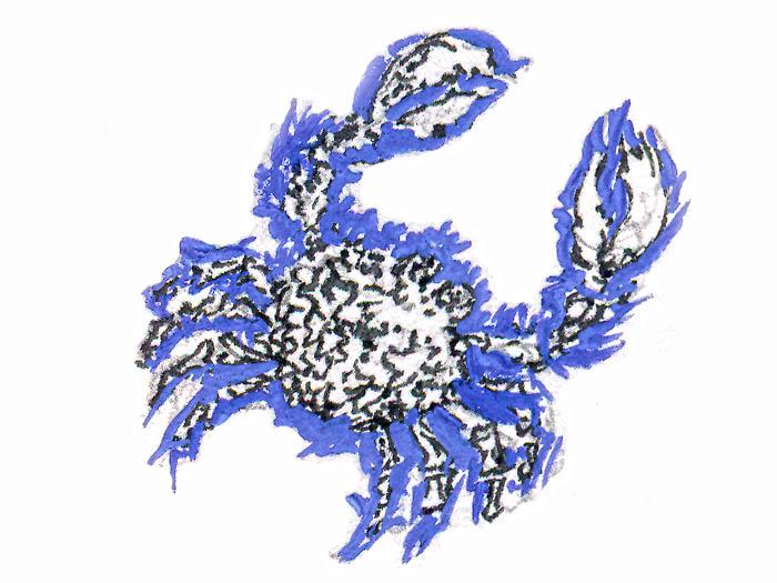 Синий краб (рисунок Е.И. Стерлиговой)