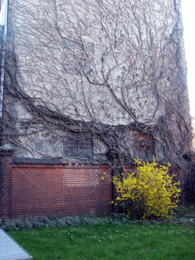 Дерево распласталось на стене возле хостела PUMPE